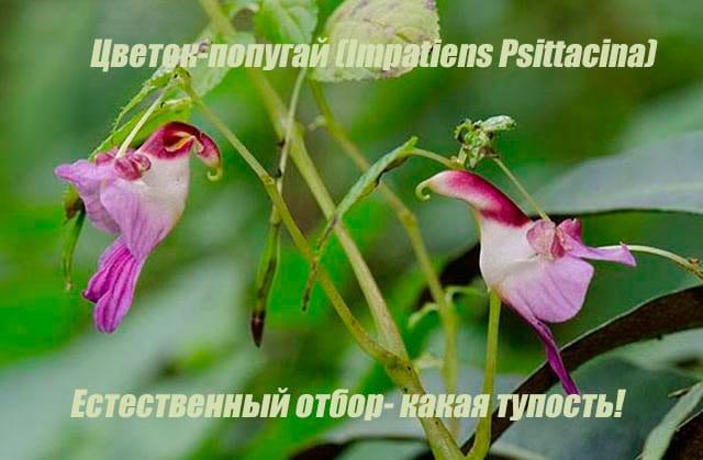 Flower_parrotnull_hj6sju